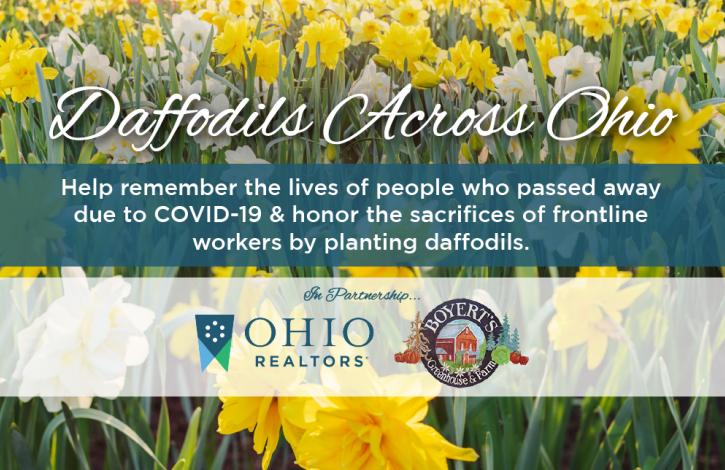 Ohio REALTORS launches 'Daffodils Across Ohio' project!